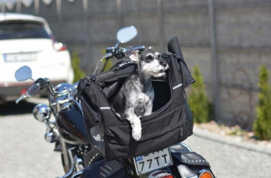 Deemeed Deemeed Pet Bag mittel  - MA141_PET_M