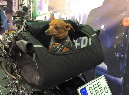Deemeed Deemeed Pet Bag klein  - MA141_PET_S